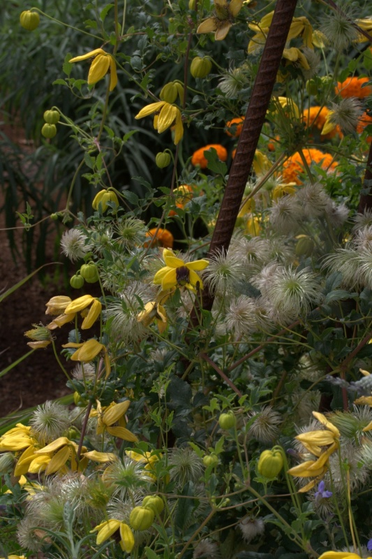 Turkish Plants For Australia Lambley Nursery