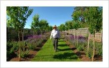 Molly's Garden Salvia nemorosa