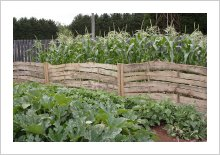 The Vegetable Garden.