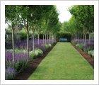 Pyrus calleryana 'Valiant' in Molly's Garden