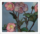 Hellebores with Night Sky